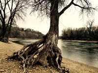 roots and river 2